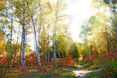 beautiful autumn forest closeup stock photo