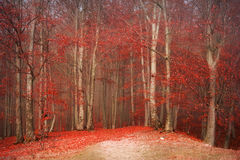 Beautiful autumn forest Royalty Free Stock Photo