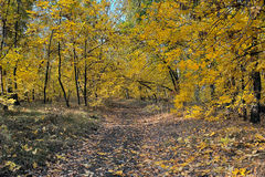 Beautiful Autumn In Forest Stock Photography