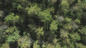 Autumn forest from above, tree tops, shooting from a drone stock video footage