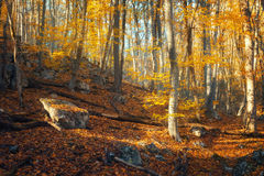Beautiful autumn forest in crimean mountains at sunset. Nature Stock Photo