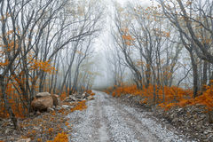 Beautiful autumn forest. In fog Stock Image