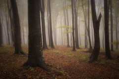 Beautiful autumn in a forest with fog Stock Photo