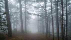 Beautiful autumn forest with fog. Royalty Free Stock Image