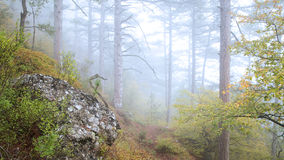 Beautiful autumn forest with fog. Royalty Free Stock Photo