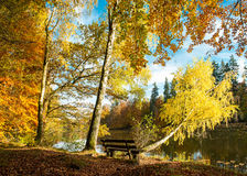Beautiful autumn forest landscape. Fall in a park Stock Photo
