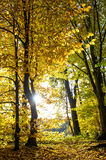 Beautiful autumn forest landscape. Fall in a park Royalty Free Stock Photo
