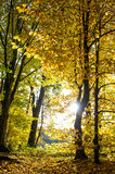 Beautiful autumn forest landscape. Fall in a park Royalty Free Stock Photography