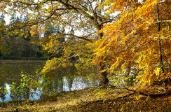 Beautiful autumn forest landscape. Fall in a park. bright nature background Royalty Free Stock Photos