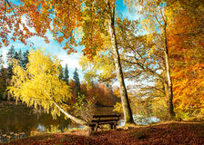 Beautiful autumn forest landscape. Fall in park. Beautiful autumn forest landscape. Fall in a nature park. Indian summer Royalty Free Stock Image