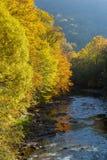 Beautiful autumn forest landscape near lake and idyllic trees reflection. Stock Image