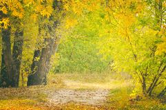 Beautiful autumn forest landscape, path in the forest. Toned photo Stock Photography