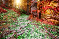 Beautiful autumn forest landscape Stock Image