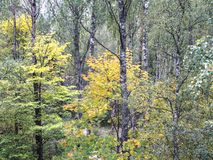 Beautiful autumn forest landscape Stock Photography