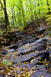 Beautiful autumn forest on the mountain cliffs. Royalty Free Stock Images