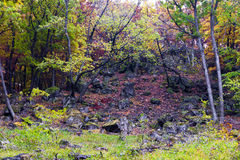 Beautiful autumn forest on the mountain cliffs. Royalty Free Stock Photos