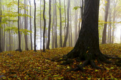 Beautiful autumn forest on the mountain cliffs. Royalty Free Stock Photography