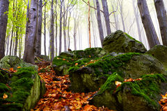 Beautiful autumn forest on the mountain cliffs. Stock Image