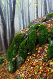 Beautiful autumn forest on the mountain cliffs. Stock Images