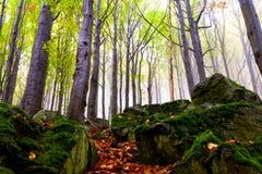 Beautiful autumn forest on the mountain cliffs. Stock Photos