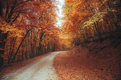 Beautiful autumn forest mountain path Royalty Free Stock Images