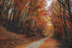 Beautiful autumn forest mountain path. Autumn mountain landscape. asphalt road going to mountains passes through the forest Stock Photos
