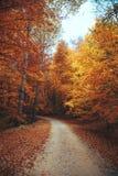 Beautiful autumn forest mountain path. Autumn mountain landscape. asphalt road going to mountains passes through the forest Stock Photo