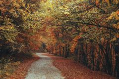 Beautiful autumn forest mountain path Royalty Free Stock Image