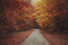Beautiful autumn forest mountain path Royalty Free Stock Photo
