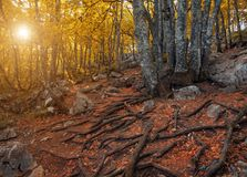 Beautiful autumn forest in the mountains at sunset Stock Photography