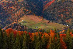 Beautiful autumn forest in the mountains at sunset Stock Photo
