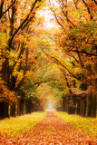 Autumn lane Stock Photos
