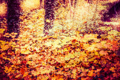 Beautiful autumn forest or park foliage, fall outdoor nature royalty free stock photos