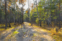 Beautiful autumn forest path at sunset Royalty Free Stock Photo