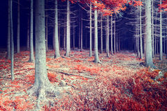 Beautiful autumn forest Stock Image