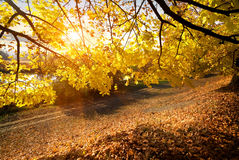 Beautiful autumn in the forest Stock Images