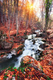 Beautiful autumn forest with river in crimean mountains at sunse Stock Photos