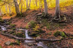 A  beautiful autumn in the forest. A river with a waterfall, trees with bright leaves. Stock Image