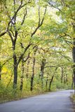 Beautiful autumn forest. Road. In the autumn forest Royalty Free Stock Photos