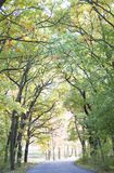 Beautiful autumn forest. Road. In the autumn forest Royalty Free Stock Photo
