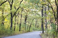 Beautiful autumn forest. Road. In the autumn forest Royalty Free Stock Image