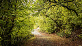 Beautiful autumn forest road. Royalty Free Stock Photos