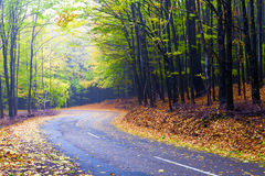 Beautiful autumn forest road winds in the mountain Stock Photography
