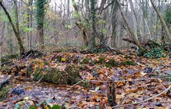 Beautiful autumn forest. Forest spring with clearwater. Natural. Landscape Stock Photography