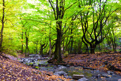 Beautiful autumn forest streams and rocks. Royalty Free Stock Photos
