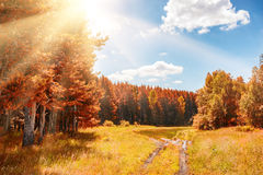 Beautiful autumn forest at sunny day