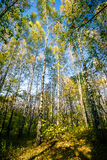 Beautiful autumn forest Stock Images