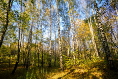 Beautiful autumn forest Royalty Free Stock Images
