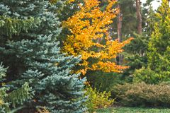 Beautiful autumn forest, trees and leave, landscape stock image