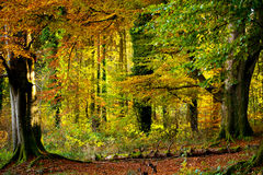 Beautiful autumn in the forest Royalty Free Stock Photos